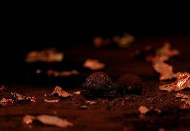Hazelnut Praline Truffles Recipe
